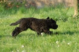 štěňata na zahradě 23.4.2011