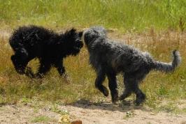honička mokrých psů